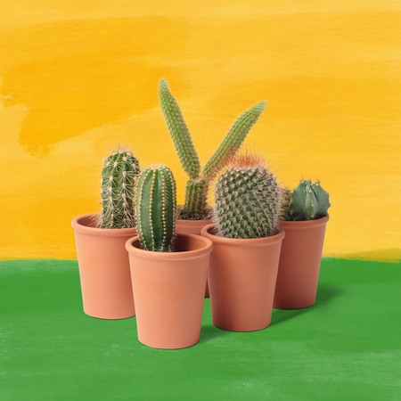 Frida Verde Kakteen-Set 'Die Familie'  Standard,  5er Set