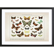 Schmetterlings-Print im Vintage-Look