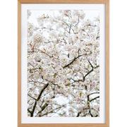 Fotografie 'Blossom White'