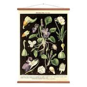 Stimmungsvolle Vintage Karte 'Viola'