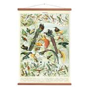 Vintage Karte 'Birds'