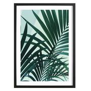 Ferienfeeling: Gerahmtes Bild 'Palm Leaves'