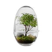 Kleines Terrarium-Ei 'Grow'