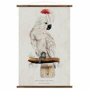 Schöne Vintage-Wandkarte 'Kakadu'