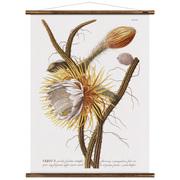 Vintage-Wandkarte 'Cereus'