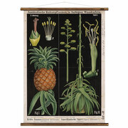 Vintage-Wandkarte 'Ananas & Agave'