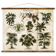 Vintage Illustration 'Grünpflanzen'