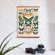 Schmetterlinge für die Wand